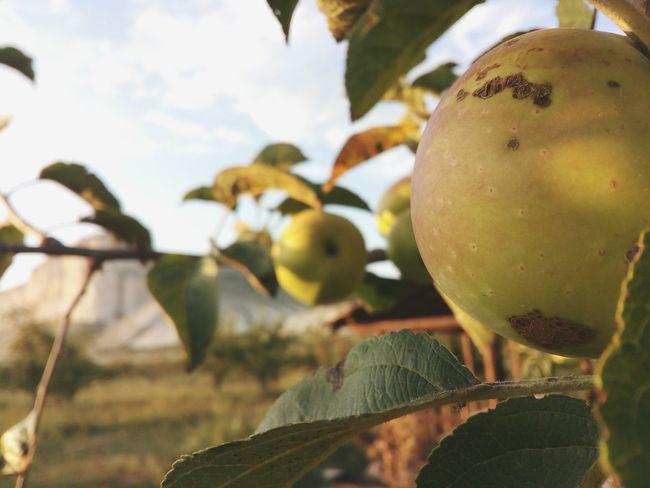 белаяскала яблоки вечернаприроде First Eyeem Photo