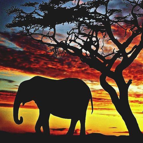Beautiful Nature Elephant Hello World ?