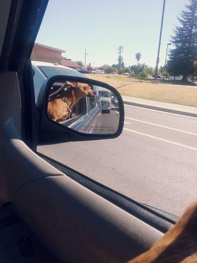 Road Dog!