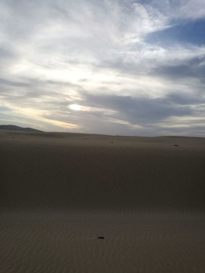 Sand Dune Desert Arid Climate Flamingo Sunset Sand Horizon Horizon Over Land Sky Animal Themes