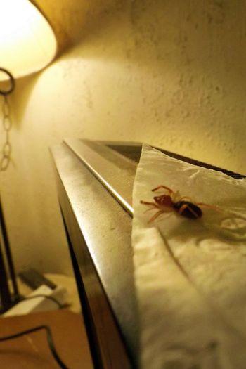 Bugs Bugs!