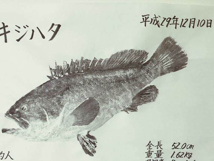 アコウ 魚拓 キジハタ Text Fish No People Science