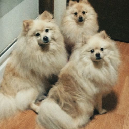 Mydadspets Cutiepatooties I Love My Dog Doggies Fluffies Hanging Out LOVEYOURPETDAY EyeEm Animal Lover