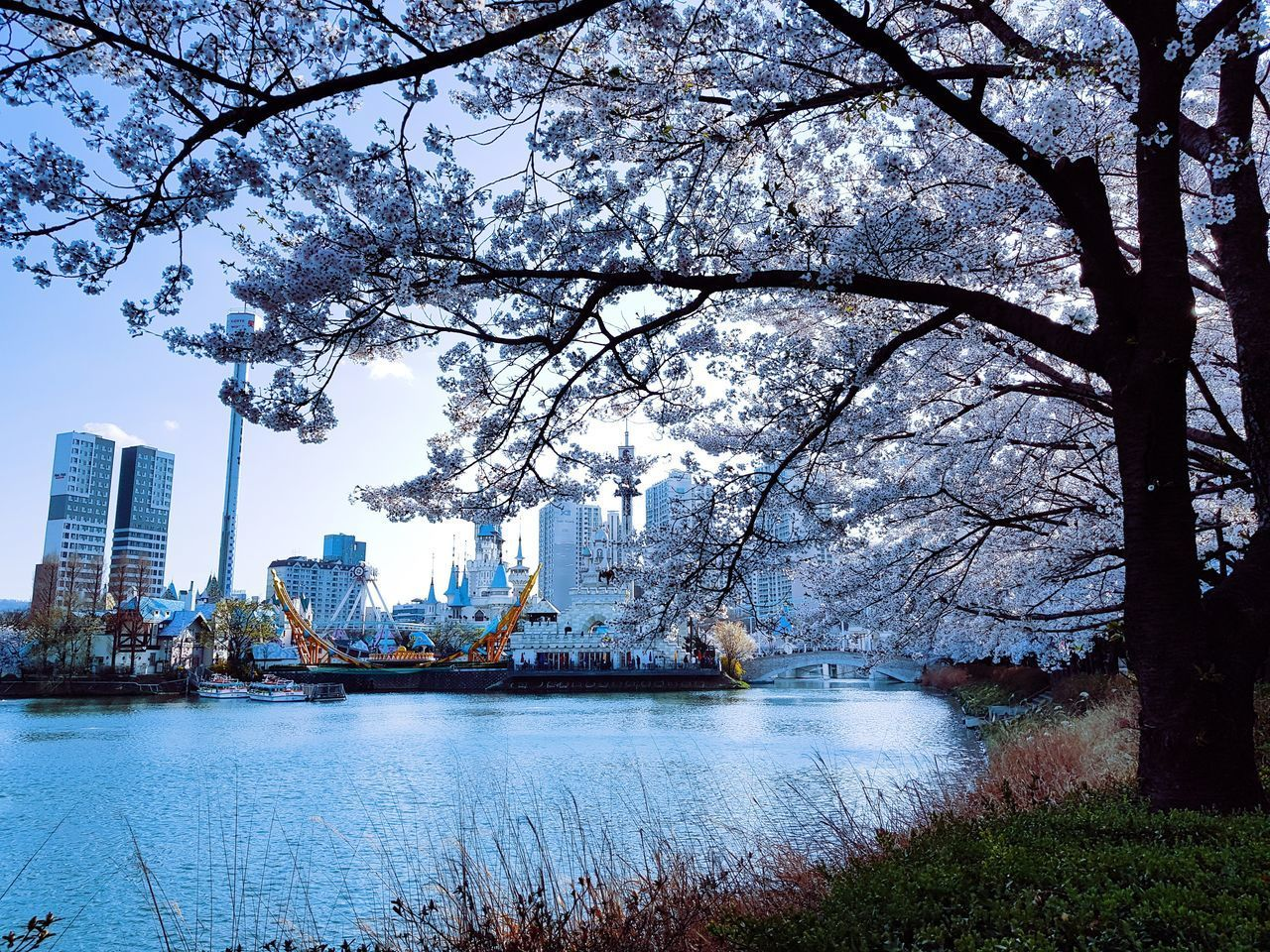architecture, tree, building exterior, plant, water, built structure, city, nature, growth, branch, building, no people, sky, blossom, day, flower, outdoors, river, flowering plant, springtime, cherry blossom, office building exterior, skyscraper, cityscape, cherry tree