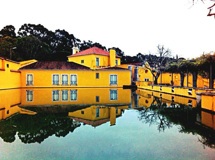 Yellow Zen Water Reflections The Press - Treasure