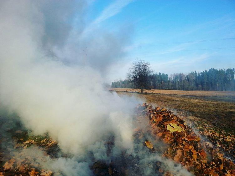 The Week On EyeEm Fall Beauty Autumn🍁🍁🍁 Smoke Firepower Lanscape Photography Landscape Hello World Nature Nature_collection Vaidava Latvia Beauty In Nature
