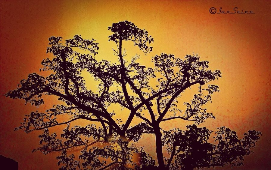 Sunrise Silhouette Eye4enchanting EyeEm Nature Lover