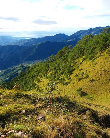 This has been taken during my hike on Mt. Ulap located Itogon, Benguet in Philippines. Mountain Landscape Nature Mountain Range Scenics Sky Tree Forest Beauty In Nature Outdoors Day Cloud - Sky Pine Tree Green Color No People Tea Crop Freshness