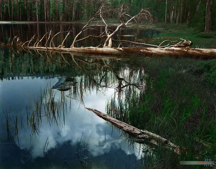 Driftwood on Siesta Lake, colorized photo of Ansel Adams by Alex Y. Lim Colors Siesta Lake Ansel Adams Beauty In Nature Dead Tree Forest Grass Growth Lake Nature Outdoors Tranquil Scene Tranquility Water