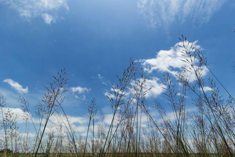 Plants 🌱 Plantae Poales Poaceae