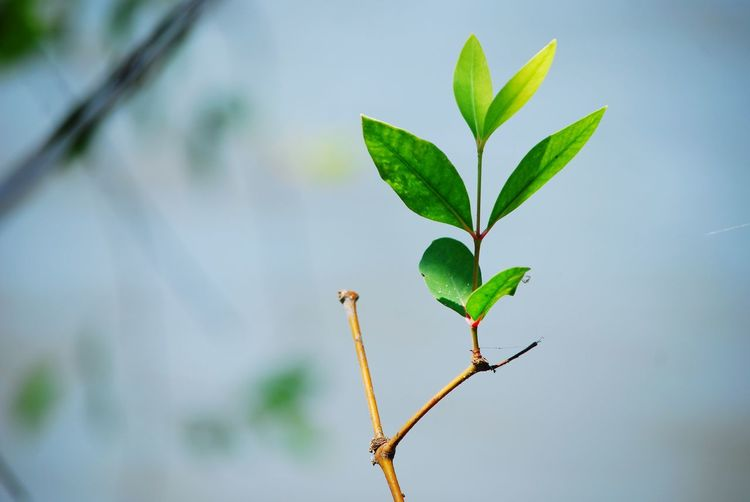 macro photo EyeEm Selects Plant Part Leaf Plant Growth Green Color Nature Day Close-up No People Outdoors Beauty In Nature Water Tree Selective Focus Freshness