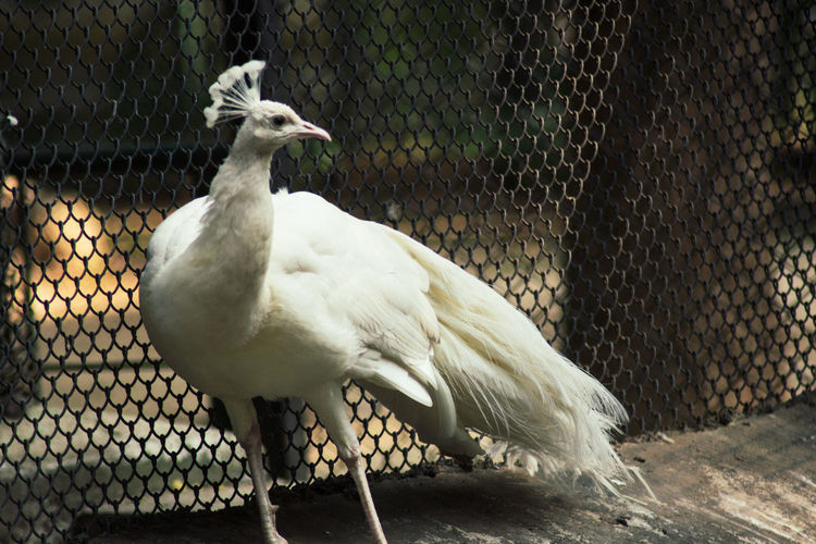 Close-up of bird in cage at zoo
