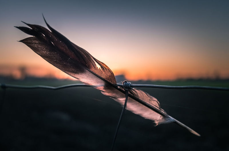 Well, I found this on my latest photowalk. Must have been there for a while because of the cobwebs, no idea how it held up for so long. Sunset Close-up Sky Nature Focus On Foreground No People Outdoors Leaf Beauty In Nature Sunlight Metal Copy Space Feather  Dusk Fragility Selective Focus Dry Feather  Fence Wire Field Horizon Over Water Backlit 50 Ways Of Seeing: Gratitude Capture Tomorrow