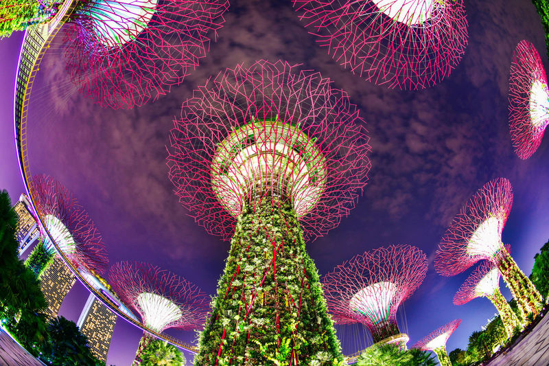 Supertree in Singapore in night time. Supertree is famous spot for traveler in Singapore city. Singapore SuperTree Supertree Grove Art And Craft Beauty In Nature Close-up Day Decoration Fish Eye Lens Flower Flower Head Flowering Plant Freshness Garden Garden By The Bay Growth Inflorescence Low Angle View Nature No People Outdoors Pattern Plant Red Sunlight
