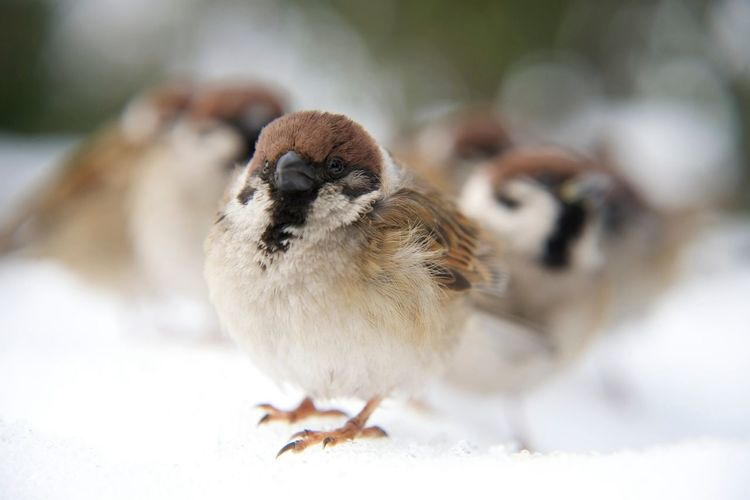 The lovely sparrows on snow Birds Snow EyeEm Best Shots Lovely