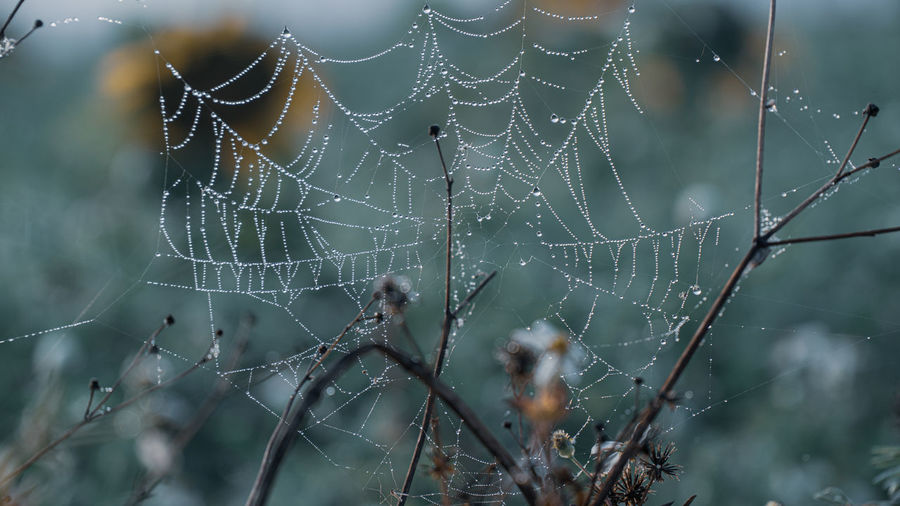 Close-up of raindrops on spider web