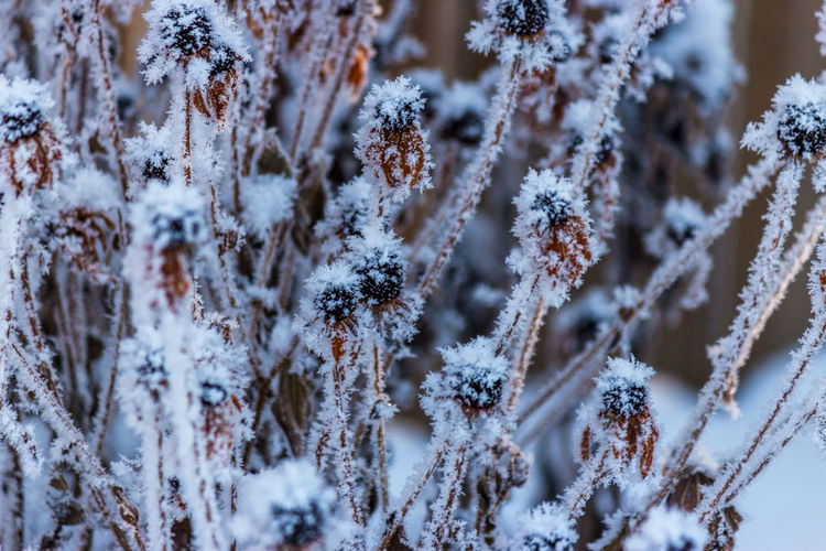 Close-up of snow covered plants against blurred background