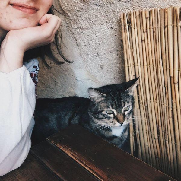 Cat Hi! Hanging Out Turkey Capadoccia
