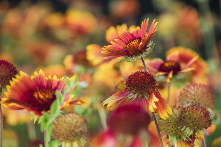 Close-up Flower Flowering Plant Beauty In Nature Plant Freshness Fragility Vulnerability  Growth Petal Flower Head Inflorescence Focus On Foreground No People Nature Selective Focus Yellow Day Pink Color Outdoors Pollen