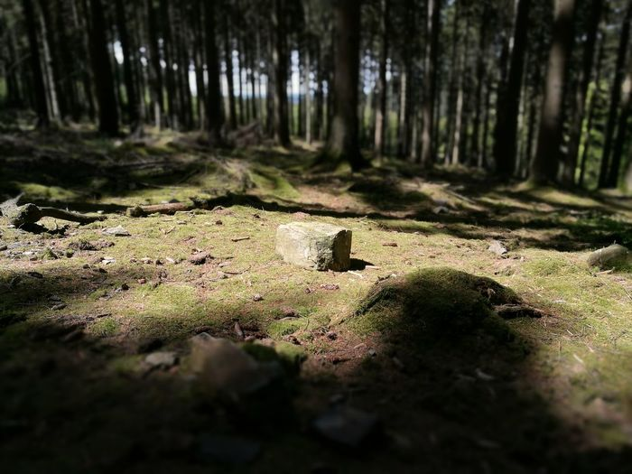 No People Nature Shadow Sunlight Outdoors Forest Day Moss Landscape Tree Rock Rock - Object Rock On Eary Woods Ninglinspo