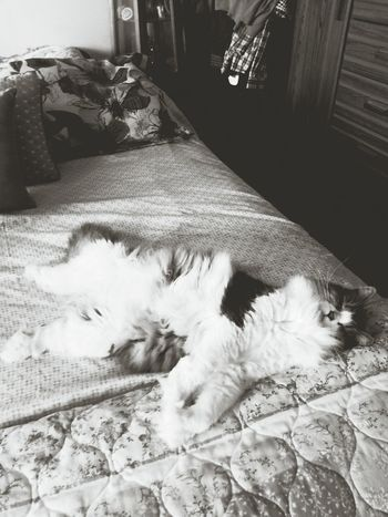 I Love My Cat ❤ Elvis Sleeping In Black And White