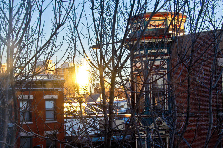 Architecture Bare Trees Boystown Chicago Cold Weather Reflection Season  Shiny Sun In Winter Sunlight Window Winter