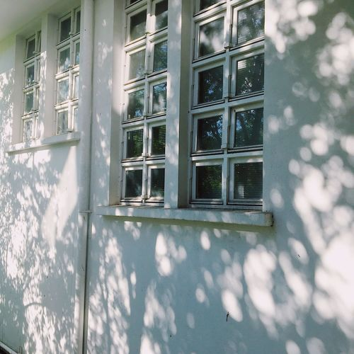 The contrast between light and shadow of trees that paint the white building. Art is Everywhere Chulalongkorn Bangkok Thailand Aesthetics Window Building Exterior Architecture Day Built Structure Building No People Nature Reflection Outdoors Shadow Sunlight Residential District City Plant