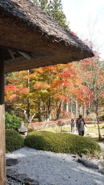 Architecture Autumn Change Day Footpath Growing Multi Colored No People Outdoors Sky Stone Material Tranquility Tree