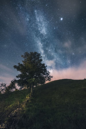 And so they came. The stars. Star - Space Astronomy Night Space And Astronomy Milky Way Galaxy Space Constellation Landscape Long Exposure Sky Star Field Nature Scenics Tree Beauty In Nature Rural Scene No People Outdoors Star Trail Lost In The Landscape