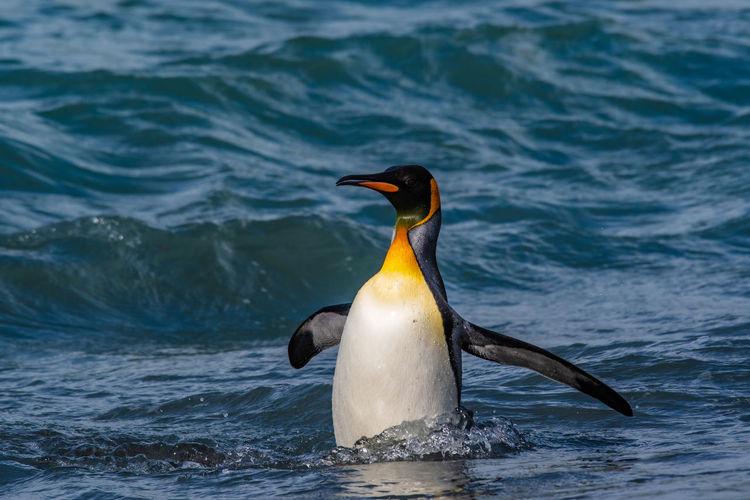 Penguin amidst sea