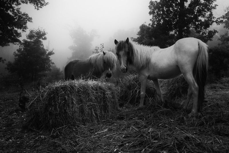 Horses standing on grassy field