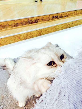 Gwangju Cat Cat♡