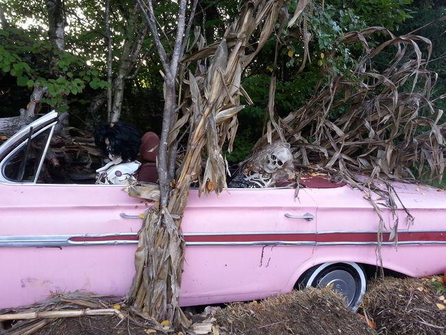Millennial Pink Pink Pink Color Outdoors Plant Halloween Gardaland Gardalandpark Tree Car Transportation Day Land Vehicle No People Water Pinkcar Pinkcolor Pinkcolour Skull Skulls Skulls💀