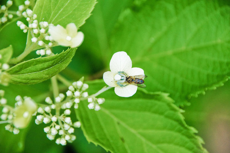 Second Acts Animal Themes Animal Wildlife Animals In The Wild Beauty In Nature Close-up Day Flower Flower Head Fragility Freshness Green Color Growth Insect Leaf Nature No People One Animal Outdoors Plant White Color