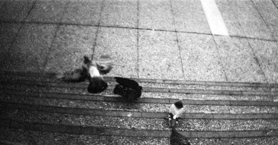 Sprocket Rocket Panorama Building Exterior Architecture Adox Silvermax 100 Koduckgirl