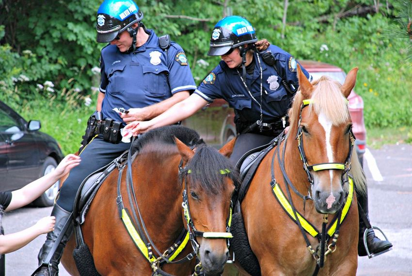 Mounted Police Horses Police Mounted Police Animals Working Summer ☀ Outdoors