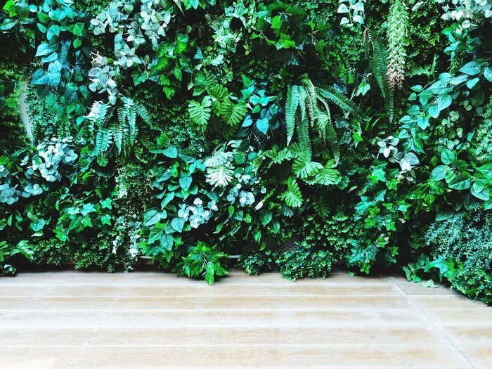 Green wall Vertical Wall Planting Wall Plants Wall Decoration Wall Art Green Color Plant Growth No People Day Tree Wall - Building Feature Green Sunlight Beauty In Nature Outdoors Creeper Plant Plant Part