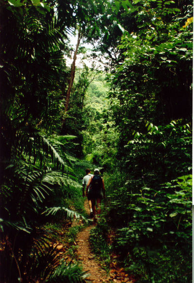 Forest Green Color Jungle Jungle Waterfall Lush Foliage Nature Rear View The Way Forward Tranquility Tree Tropical Two People Walking