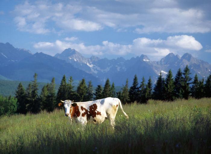 Horses on landscape against mountains
