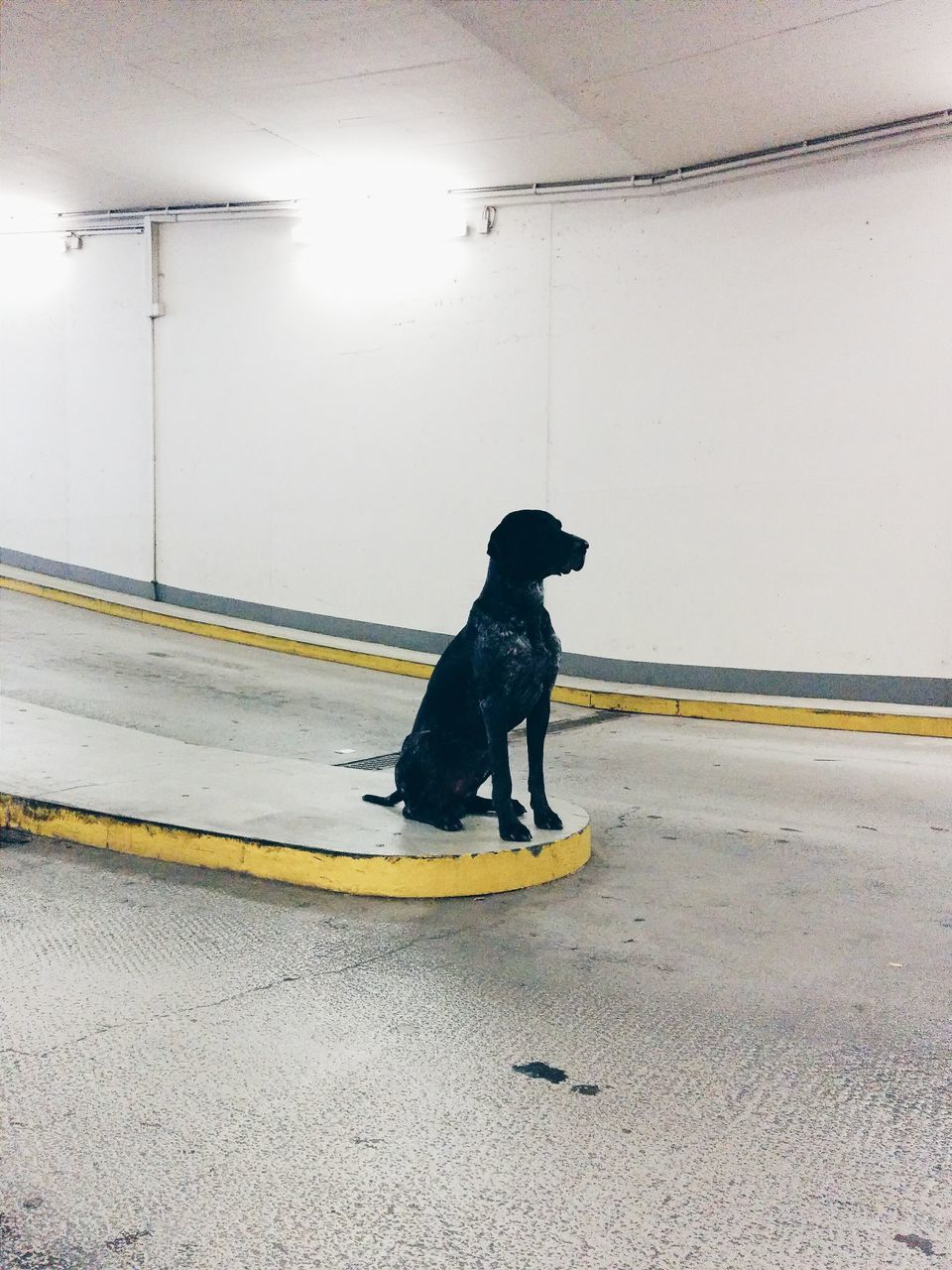 Dog In Parking Lot Waiting
