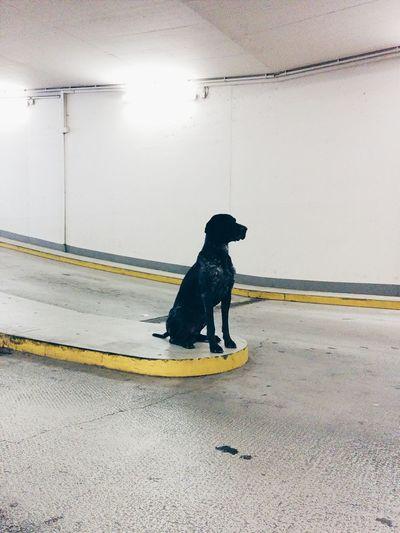 I met this cute boy today! Deutschland. Dein Tag Vscocam Dog Underground