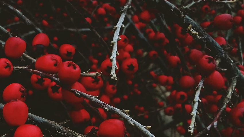 #red #grey #photography #Nature  #EyeEmNewHere #streetphotography Tree No People Close-up Nature Outdoors Fragility Plant Beauty In Nature