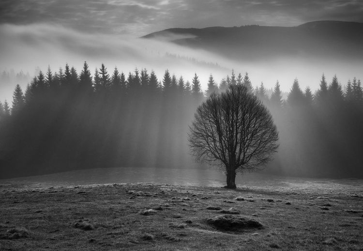 Rodnei Mountains National Park, Romania Bare Tree Beauty In Nature Black And White Friday Blackandwhite Branch Cold Temperature Day Fog Landscape Lone Mist Nature No People Outdoors Remote Sky Tranquil Scene Tranquility Tree My Best Photo