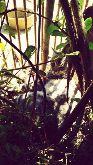 Tobi taking a nap First Eyeem Photo
