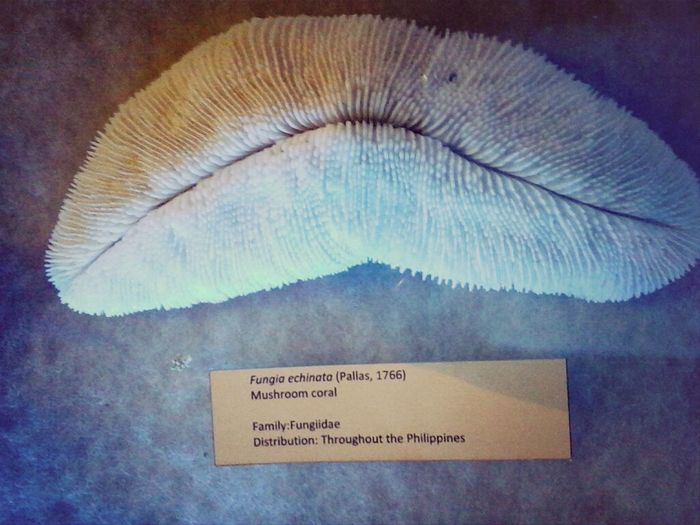 Thespians Nuartapp ECE131 Fieldtrip #NationalMuseum