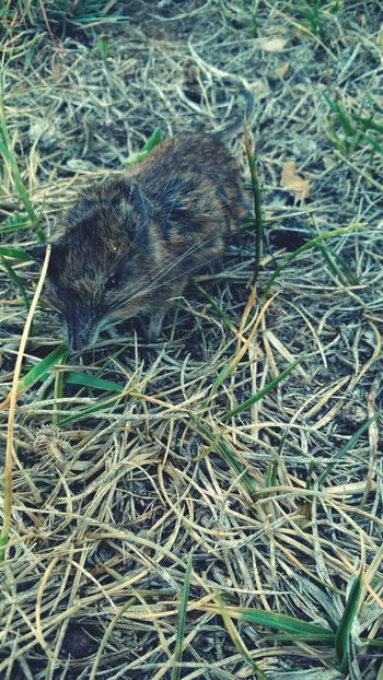 Dead Animals Mouse Nature EyeEm Nature Lover