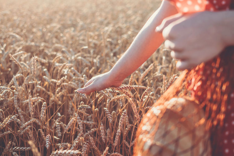 Grain exports, wheat harvest and export limits, global food security. wheat seeding. farmers