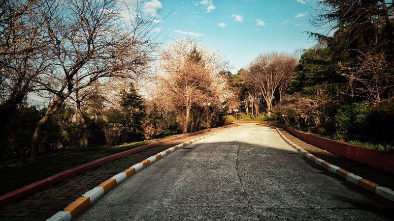 No People Tree The Way Forward Outdoors Road Nature EyeEm Best Shots EyeEmNewHere Ktu