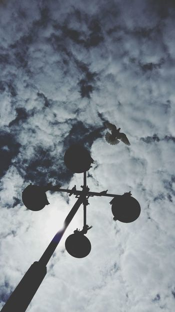 Flying Bird Farolas Ligths In The City Sky And Clouds Shadows & Lights Shadow EyeEm Gallery EyeEm Animal Lover Shot Camera Close Up Street Photography Share Your Adventure No Filter, No Edit, Just Photography FVDStudio Samsungphotography