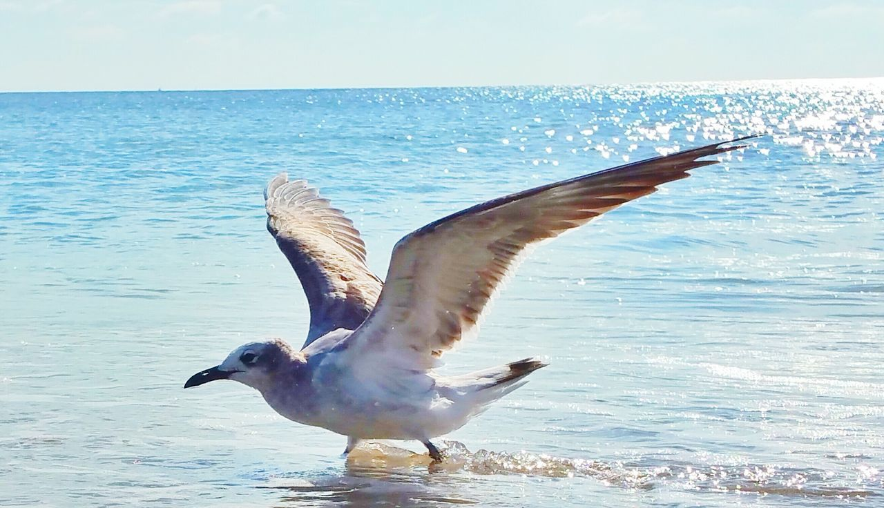 sea, horizon over water, water, nature, animal themes, bird, animals in the wild, spread wings, flying, beauty in nature, seagull, no people, sky, day, mid-air, outdoors, scenics, animal wildlife, close-up